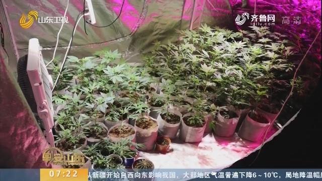 【闪电新闻排行榜】抓获嫌疑人34名 缴获毒品大麻11公斤