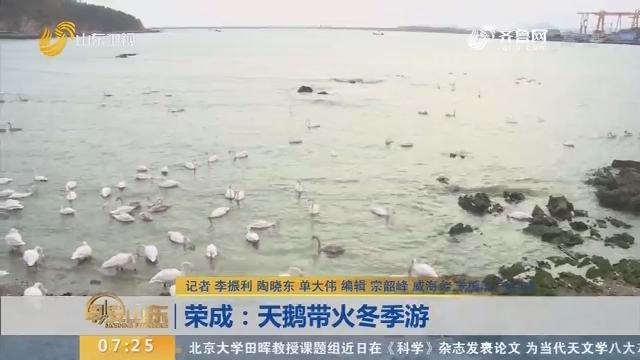 荣成:天鹅带火冬季游