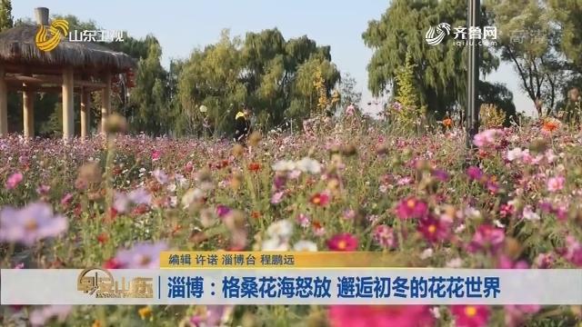淄博:格桑花海怒放 邂逅初冬的花花世界