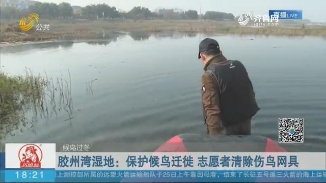 【候鸟过冬】胶州湾湿地:保护候鸟迁徙 志愿者清除伤鸟网具