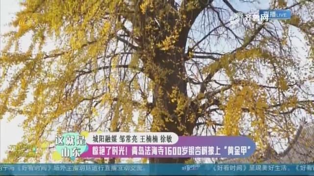 """【这就是山东】惊艳了时光!青岛法海寺1600岁银杏树披上""""黄金甲"""""""