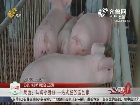 莱西:认购小猪仔 一站式服务送到家