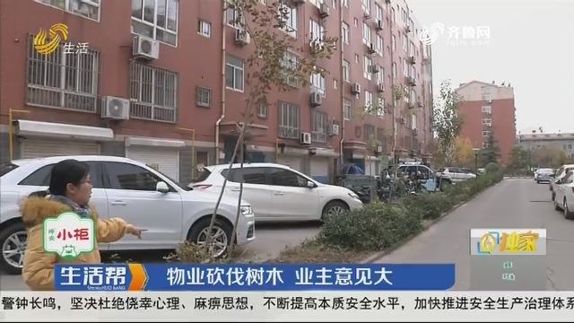 淄博:物业砍伐树木 业主意见大