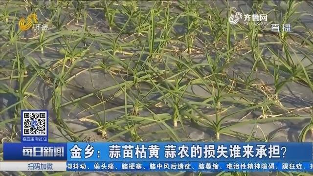金乡:蒜苗枯黄 蒜农的损失谁来承担?