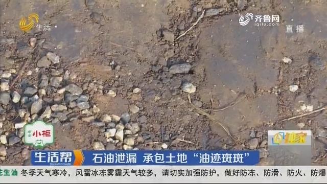 """潍坊:石油泄漏 承包土地""""油迹斑斑"""""""