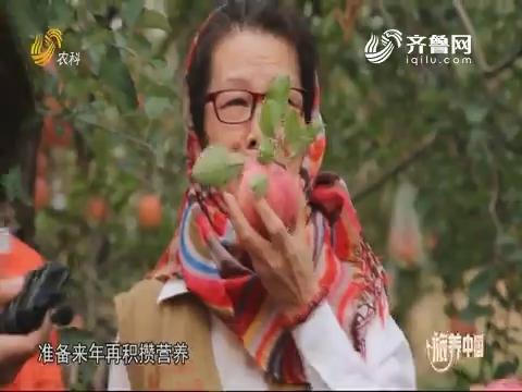 20191206《旅养中国》:招远——康养有福地 不负好时光