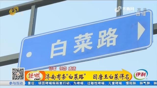 """济南有条""""白菜路"""" 因唐王白菜得名"""