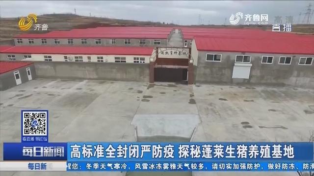 高标准全封闭严防疫 探秘蓬莱生猪养殖基地