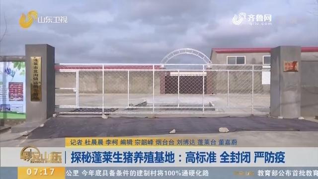 【闪电新闻排行榜】探秘蓬莱生猪养殖基地:高标准 全封闭 严防疫