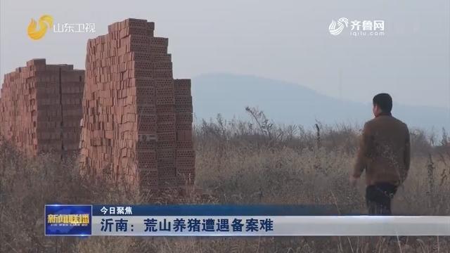 【今日聚焦】沂南:荒山养猪遭遇备案难