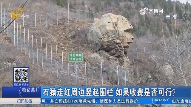 石猿走红周边竖起围栏 如果收费是否可行?