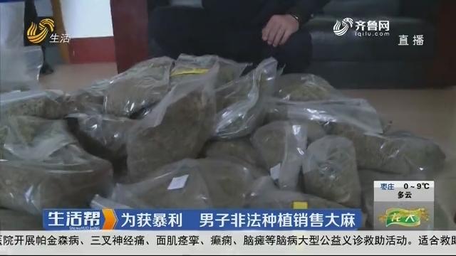临沂:为获暴利 男子非法种植销售大麻