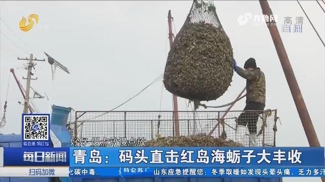 青岛:码头直击红岛海蛎子大丰收