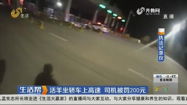 烟台:活羊坐轿车上高速 司机被罚200元