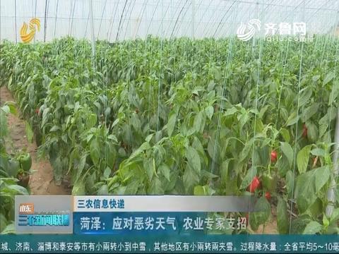 【三农信息快递】菏泽:应对恶劣天气 农业专家支招