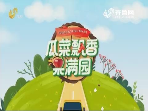 2019年12月26日《亲土种植·瓜菜飘香果满园》完整版
