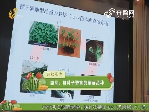 四星:用种子繁育的草莓品种
