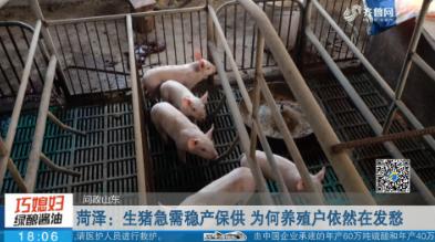 【问政山东】菏泽:生猪急需稳产保供 为何养殖户依然在发愁