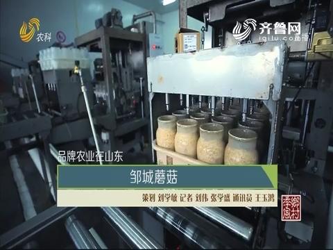 【品牌农业在山东】邹城蘑菇