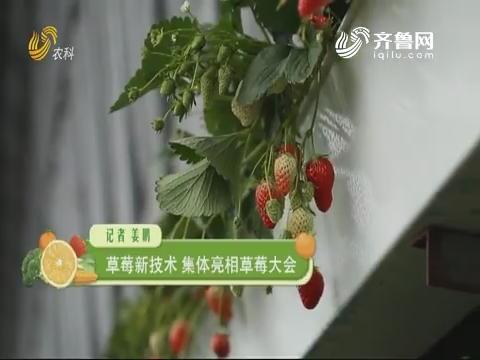 草莓新技术 集体表态草莓大会