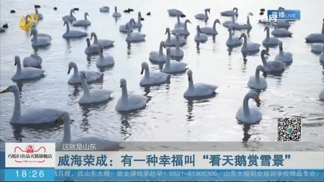 """【这就是山东】威海荣成:有一种幸福叫""""看天鹅赏雪景"""""""