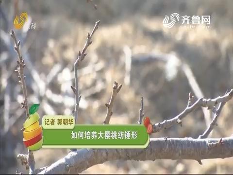 【农技一点通】如何培养大樱桃纺锤形