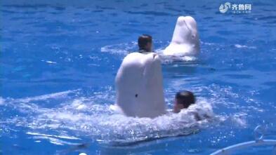 【冬游齐鲁 乐享嘉年】德州:快和海洋动物来个约会吧 