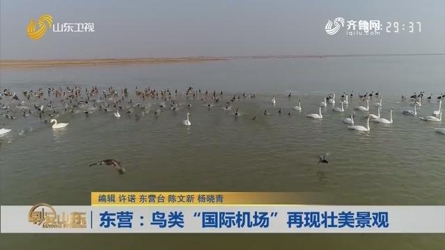 """东营:12万雁鸭欢闹黄河口 鸟类""""国际机场""""再现壮美景观"""