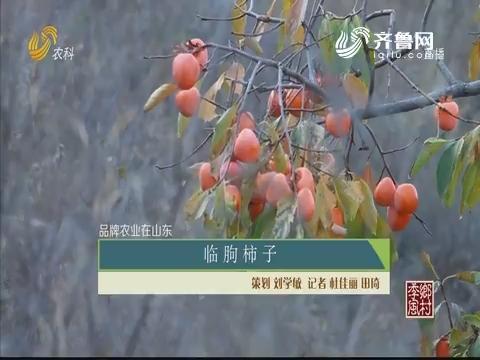 【品牌农业在山东】临朐柿子