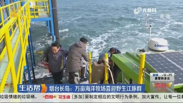 烟台长岛:万亩海洋牧场喜迎野生江豚群