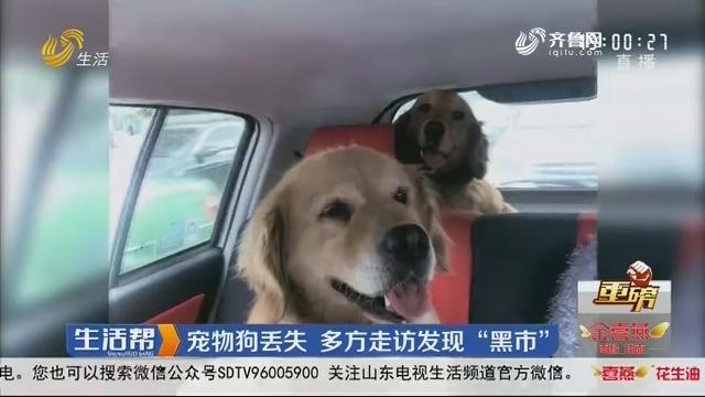 """【重磅】青岛:宠物狗丢失 多方走访发现""""黑市"""""""