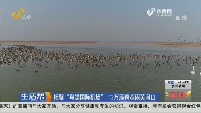"""东营:相聚""""鸟类国际机场"""" 12万雁鸭欢闹黄河口"""