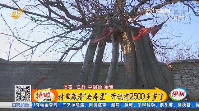 """济南:村里藏着""""老寿星""""听说有2500多岁了"""
