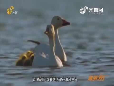 20200112《旅游365》:青海湖