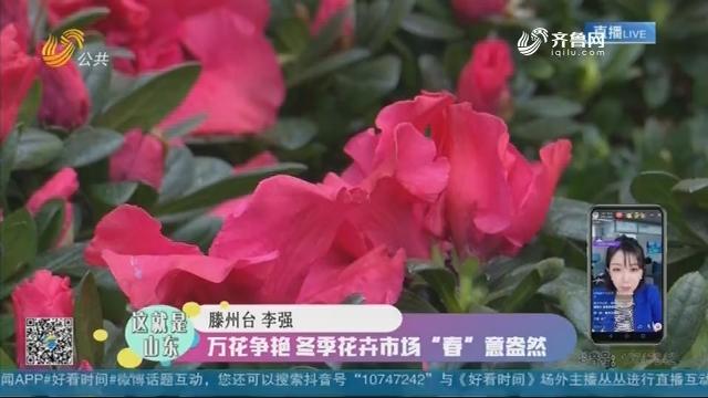 """【这就是山东】万花争艳 冬季花卉市场""""春""""意盎然"""