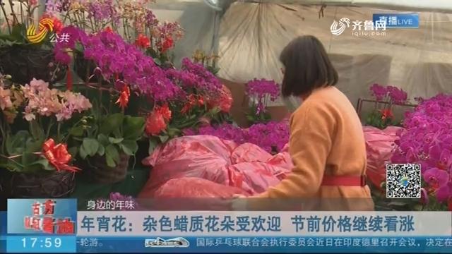 【身边的年味】年宵花:杂色蜡质花朵受欢迎 节前价格继续看涨