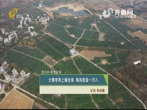 【史丹利·星光农场】大青枣用上臻全溶 每亩收益一万八