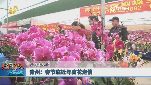 【新春走基层】青州:春节临近年宵花走俏