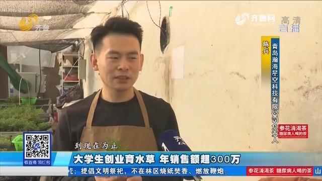 青岛:大学生创业育水草 年销售额超300万