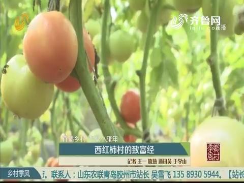 【直播乡村 幸福小康年】西红柿村的致富经