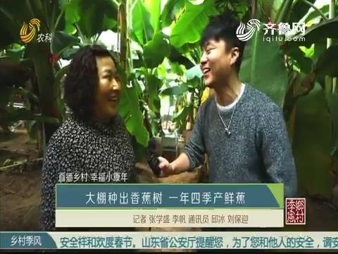 【直播乡村·幸福小康年】大棚种出香蕉树 一年四季产鲜蕉