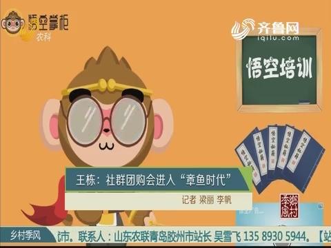 """王栋:社群团购会进入 """"章鱼时代"""""""