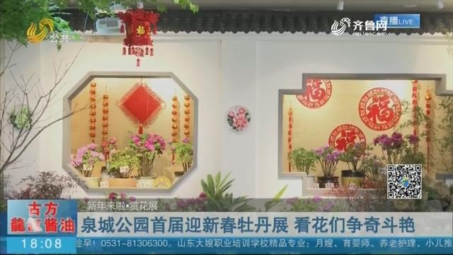 泉城公园首届迎新春牡丹展 展览持续至正月十六