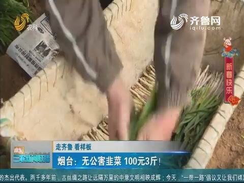【走齐鲁 看样板】烟台:无公害韭菜 100元3斤!