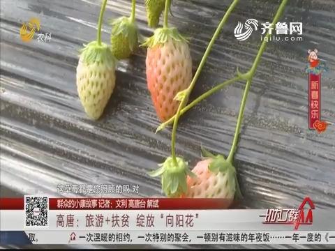 """【群众的小康故事】高唐:旅游+扶贫 绽放""""向阳花"""""""