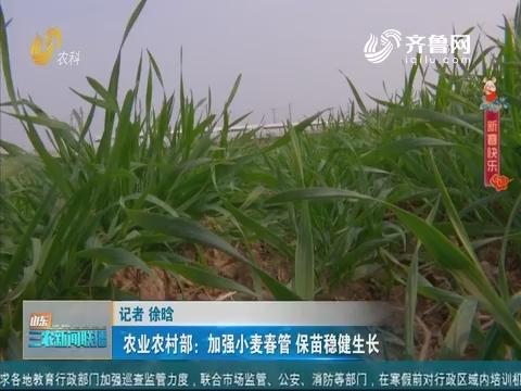 【春季麦田管理】农业农村部:加强小麦春管 保苗稳健生长