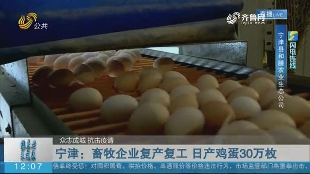 【众志成城 抗击疫情】闪电连线:宁津 畜牧企业复产复工 日产鸡蛋30万枚