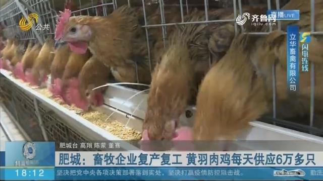 【闪电连线】肥城:畜牧企业复产复工 黄羽肉鸡每天供应6万多只