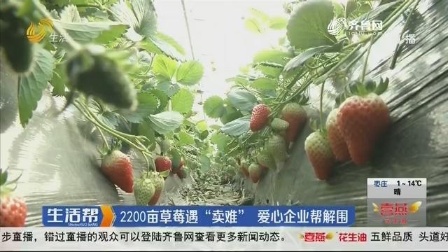 """2200亩草莓遇""""卖难"""" 爱心企业帮解围"""