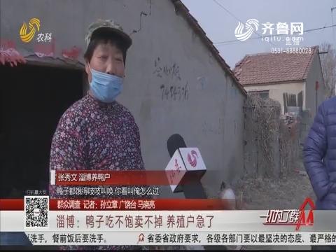【群众调查】淄博:鸭子吃不饱卖不掉 养殖户急了